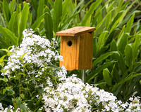 House for rent; includes a bird friendly garden!