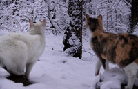 "Spot & Hippy: ""What is that white stuff?"""