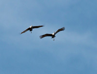 Loved watching their flying patterns.