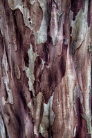 Crepe Myrtle Tree Trunk/Bark