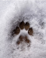 My cat Spot's paw print